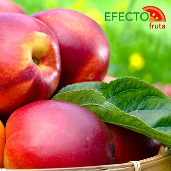 Imagen de la categoría Las frutas del verano II parte. Frutas de Hueso