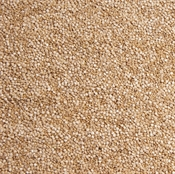 Imagen de Semillas de Quinoa