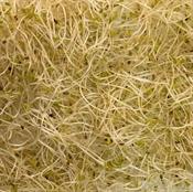 Imagen de Brotes de Alfalfa