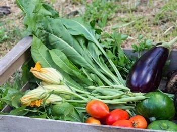 Imagen de la categoría Las verduras de septiembre