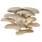 Imagen de Setas Cultivadas granel
